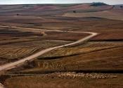 De camino a Caravaca, por los campos de trigo y cebada. Día 3. Autor Juantxi by Flickr.