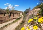 Le printemps est la meilleure saison pour découvrir l'Espagne à vélo. Sur le chemin de Vélez Blanco. Jour 2. Auteur: Alex Rodier