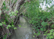 Wild irrigation ditch along our way. Author: Alex Rodier