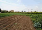 Paisaje de la huerta de Murcia: cítricos y hortalizas. Autor: Alex Rodier